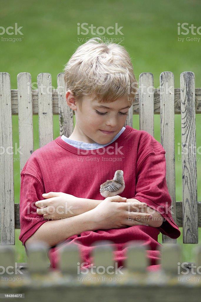 Boy Admiring Little Chick royalty-free stock photo
