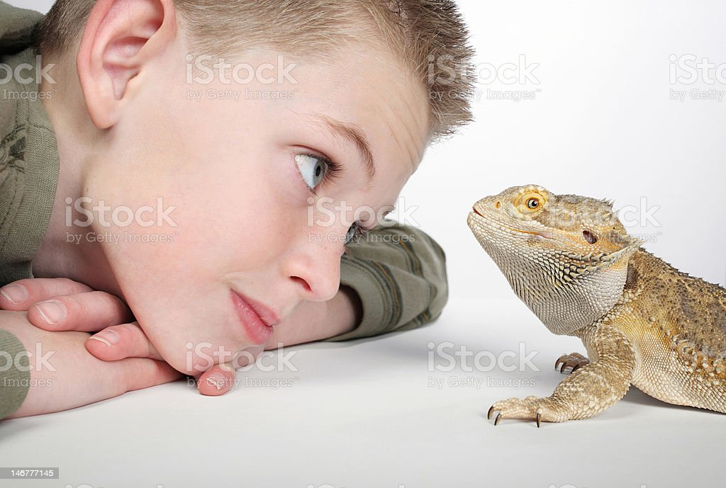 boy admiring pet lizard stock photo