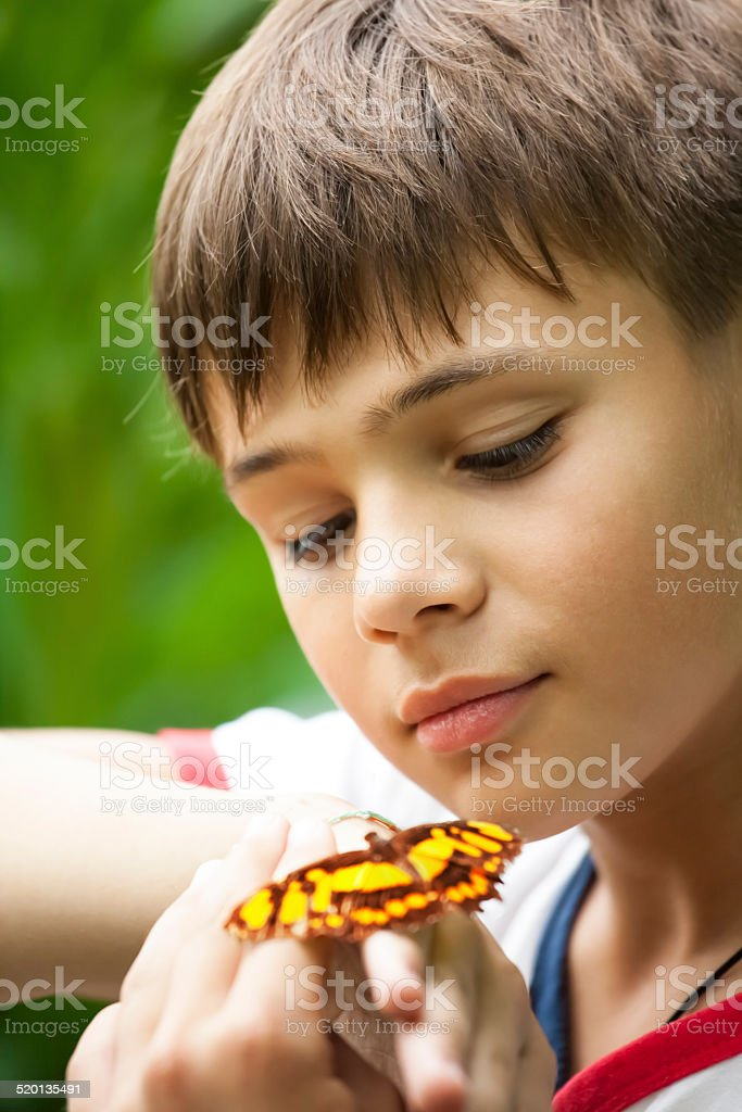 Boy and a butterfly stock photo