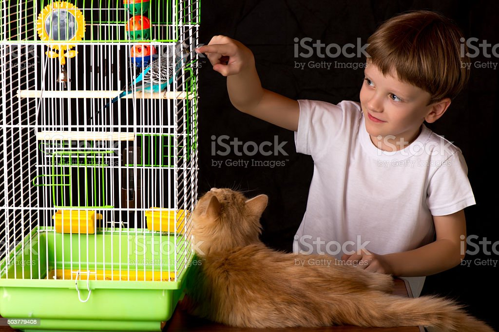 Boy and a cat looking at the wavy parrot. stock photo