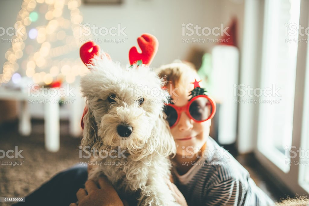 Boy and a dog stock photo