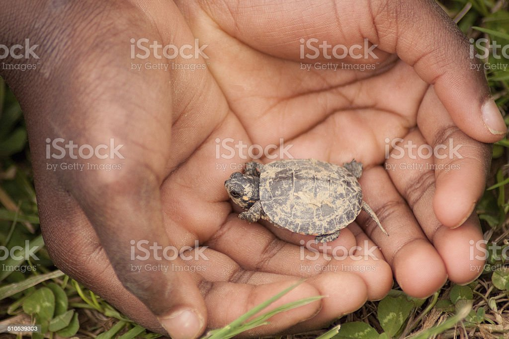 boy and baby turtle royalty-free stock photo