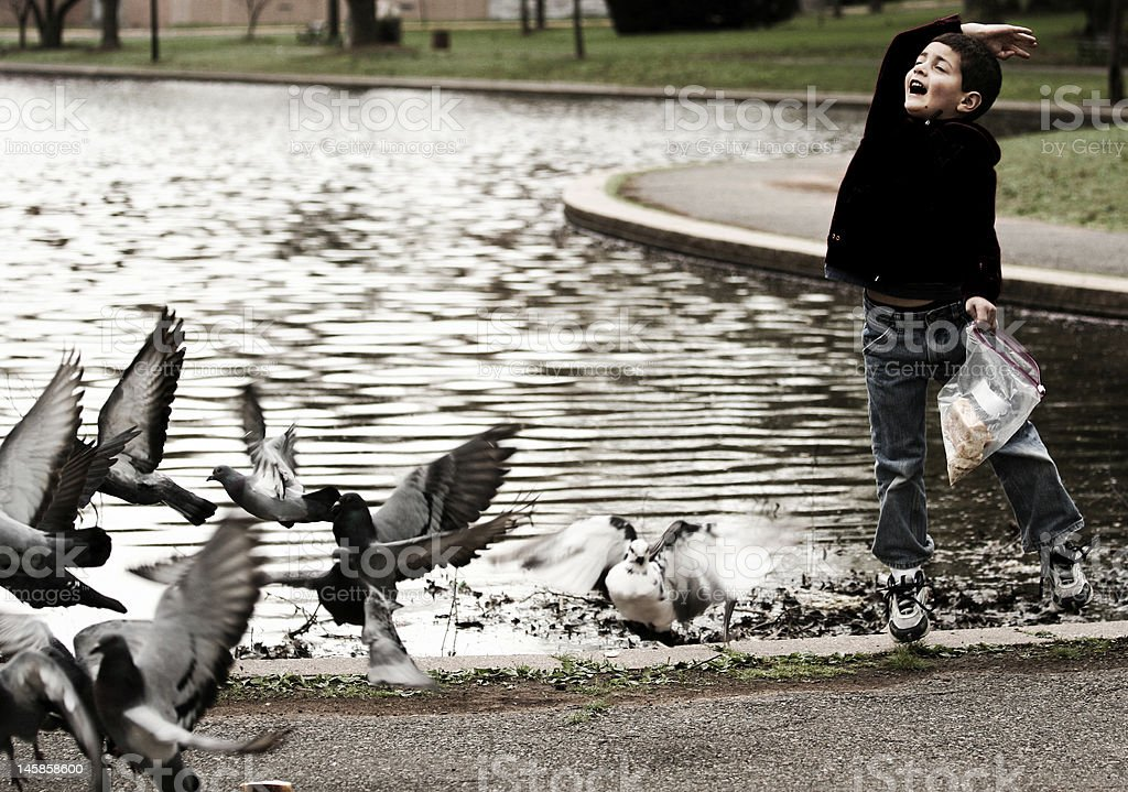 boy and birds stock photo