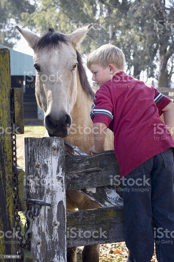Boy and Buckskin Horse stock photo