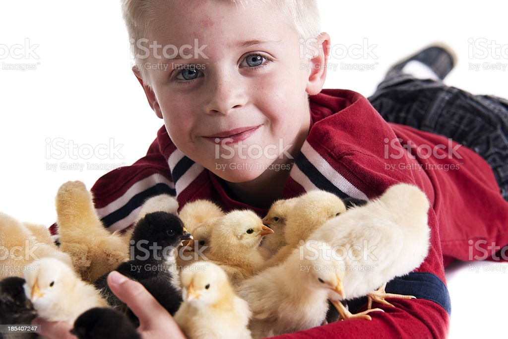Boy and Chicks stock photo
