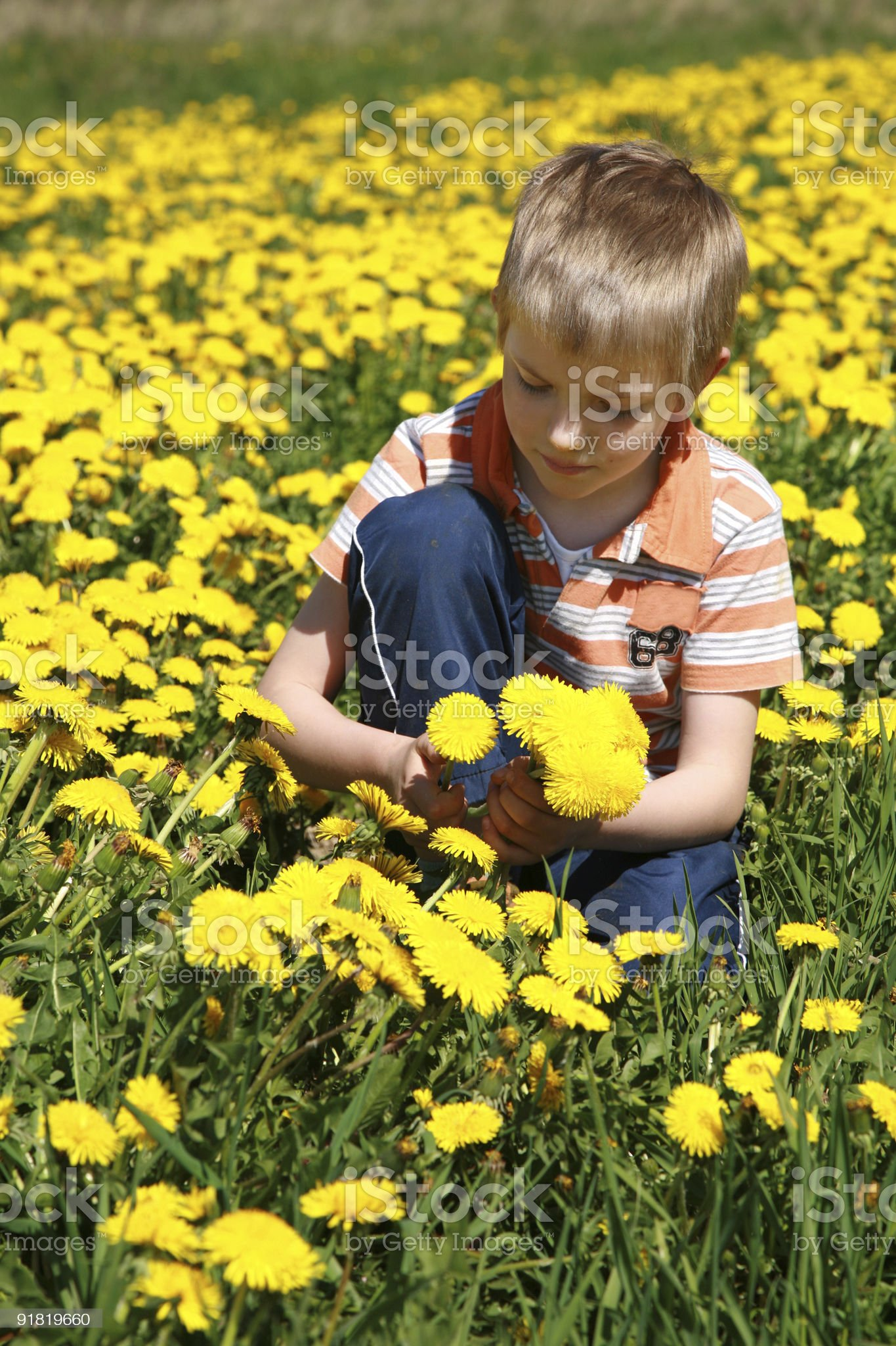 Boy and dandelions. royalty-free stock photo