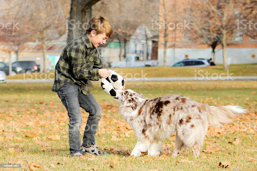 Boy and Dog Playing in Park stock photo