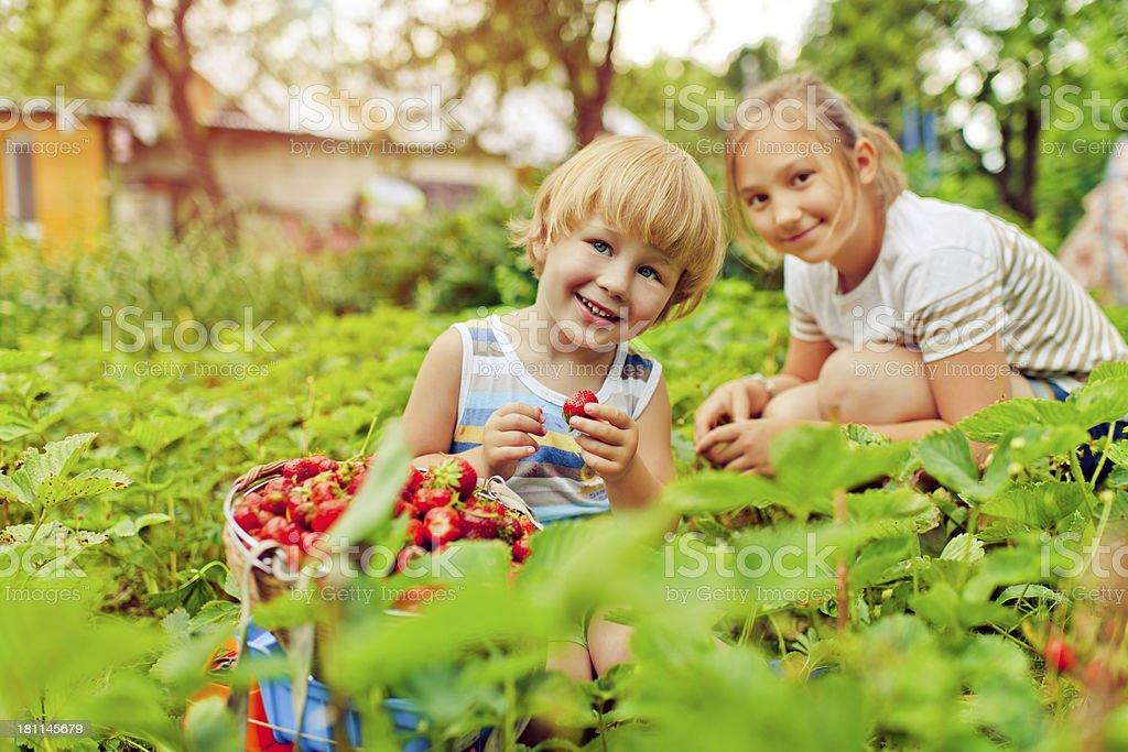 Boy and girl with strawberry stock photo