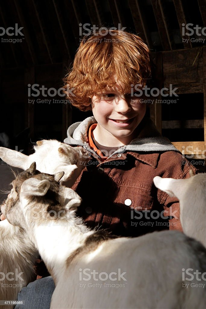 Boy and Goats royalty-free stock photo