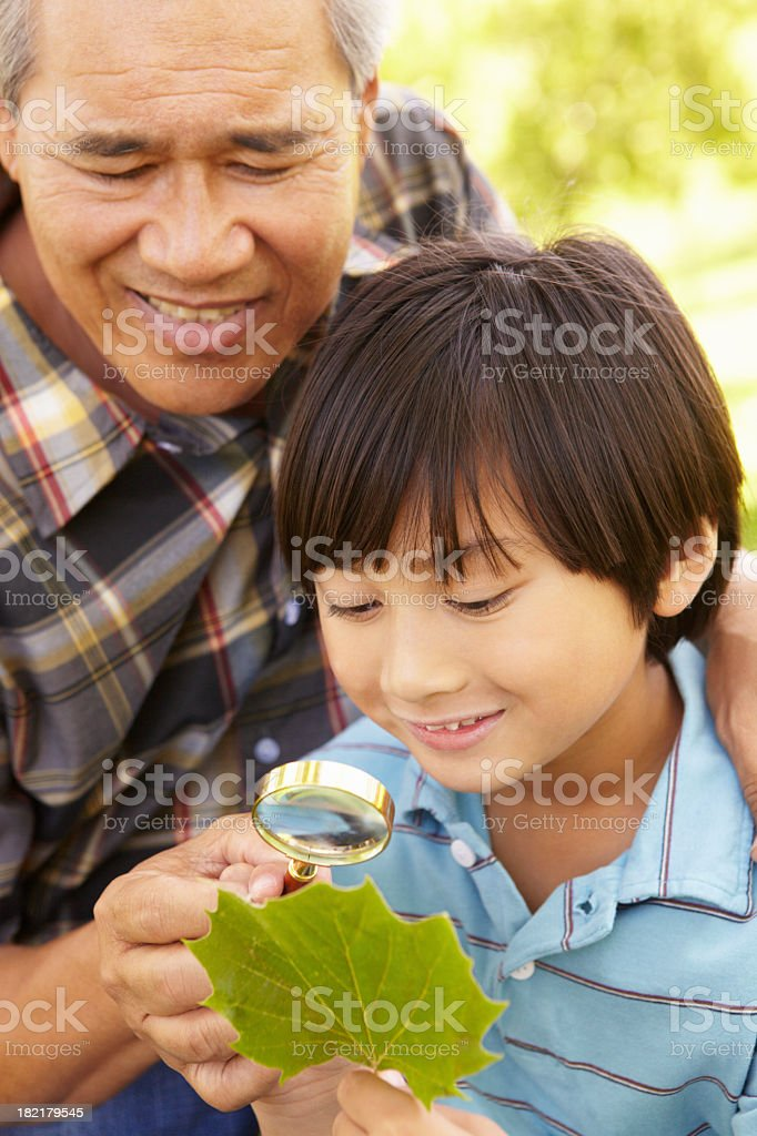 Boy and grandfather examining leaf royalty-free stock photo