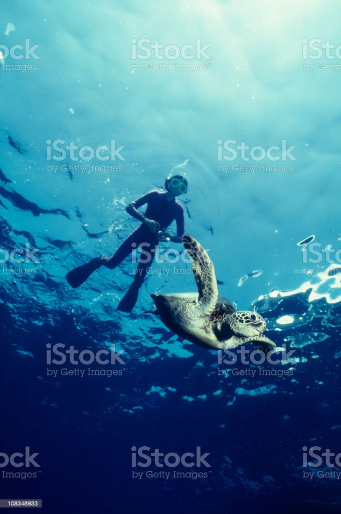 Boy and Green Sea Turtle stock photo