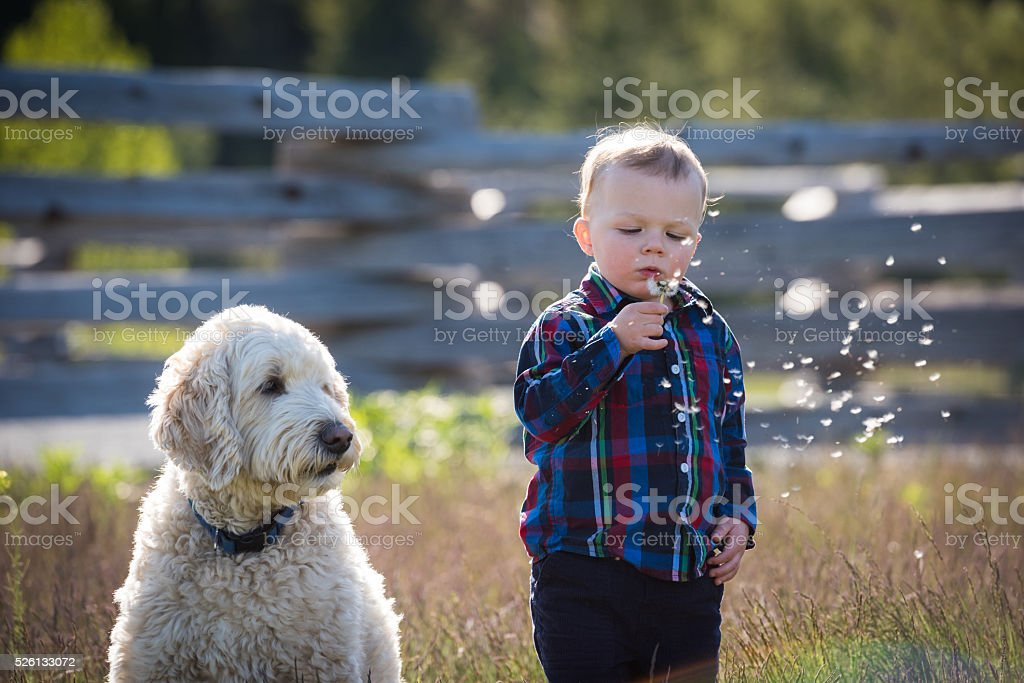 Boy and his dog stock photo