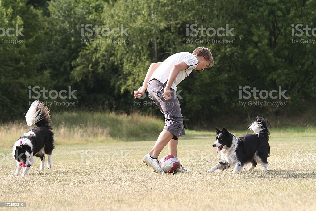 Boy and his dogs. royalty-free stock photo