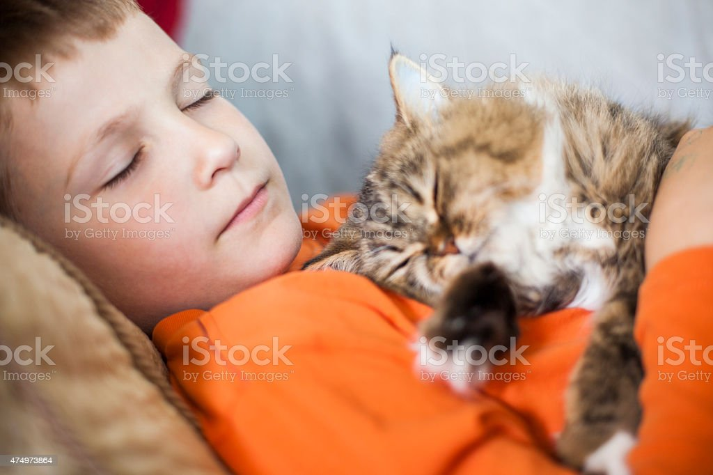 Boy and persian cat sleeping together on the couch stock photo