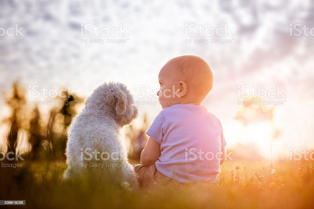 Boy and puppy stock photo