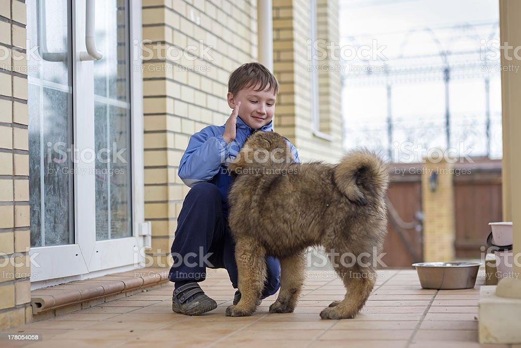 Boy and puppy Tibetan Mastiff stock photo