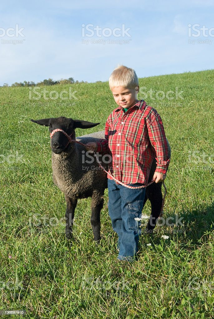 Boy and Sheep Walking in Morning Sunlight stock photo