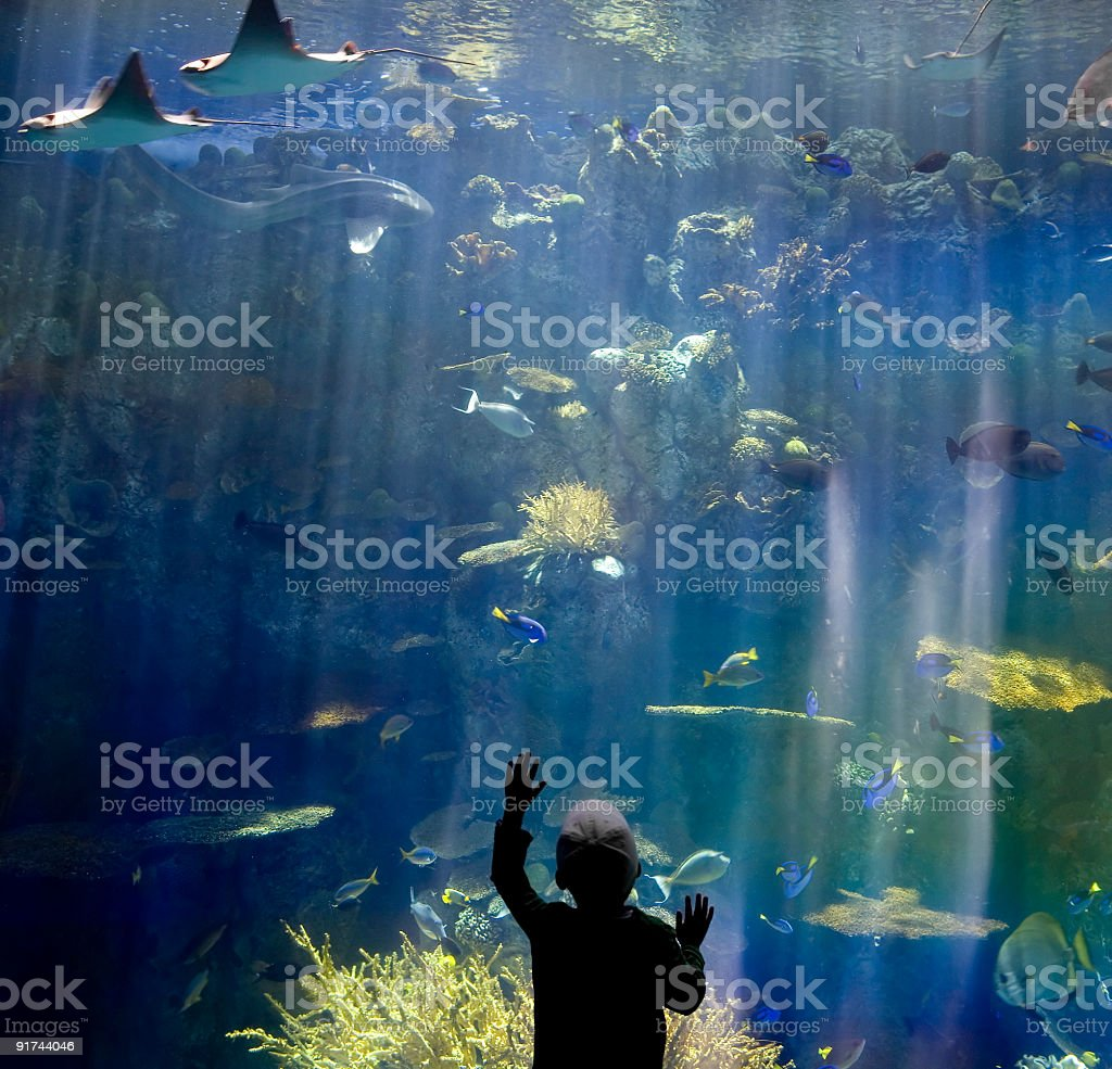 Boy at Aquarium stock photo