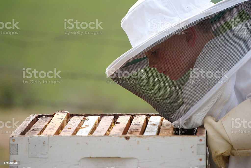 Boy Beekeeper Looking in Empty Hive royalty-free stock photo