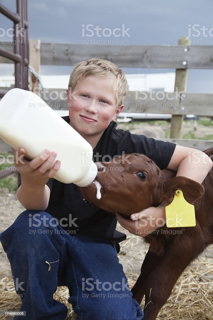 Boy Bottle Feeding a Calf royalty-free stock photo