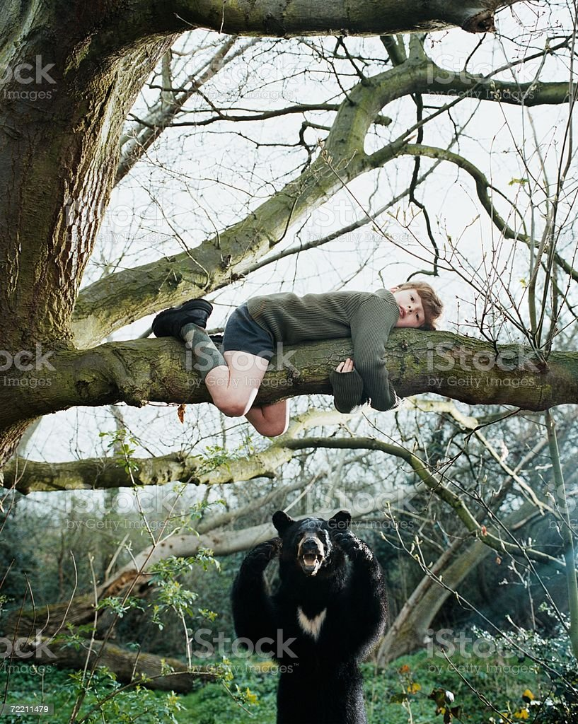 Boy climbing a tree to escape bear stock photo