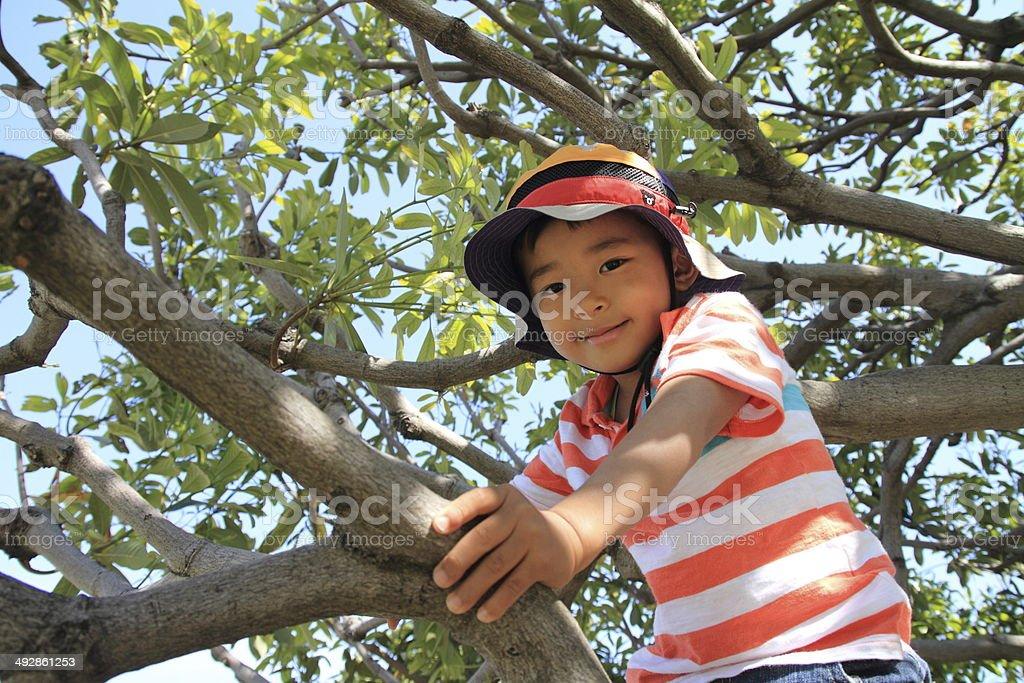 Boy climbing the tree royalty-free stock photo