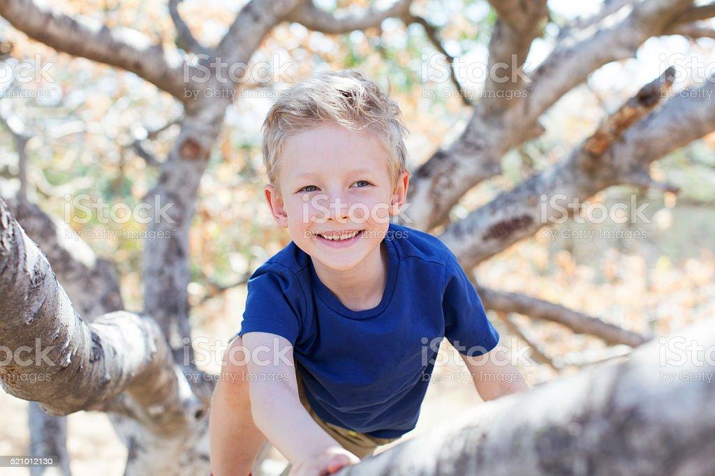 boy climbing the tree stock photo