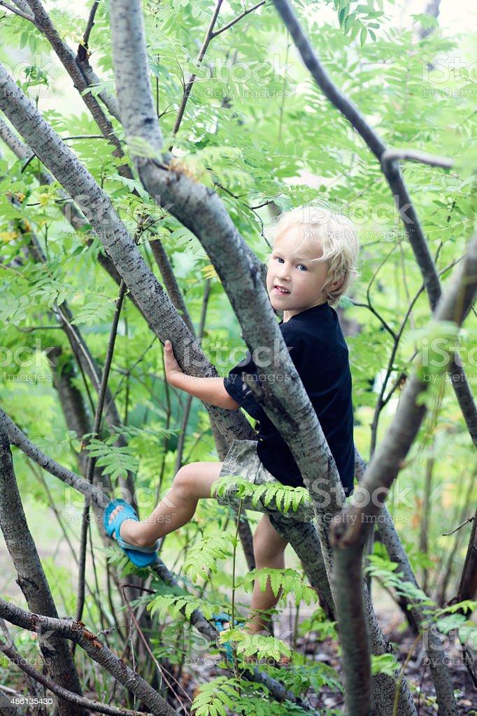 Boy climbs on the tree stock photo