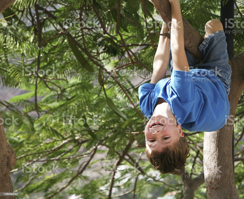 Boy clinging to fir tree branch and smiling stock photo