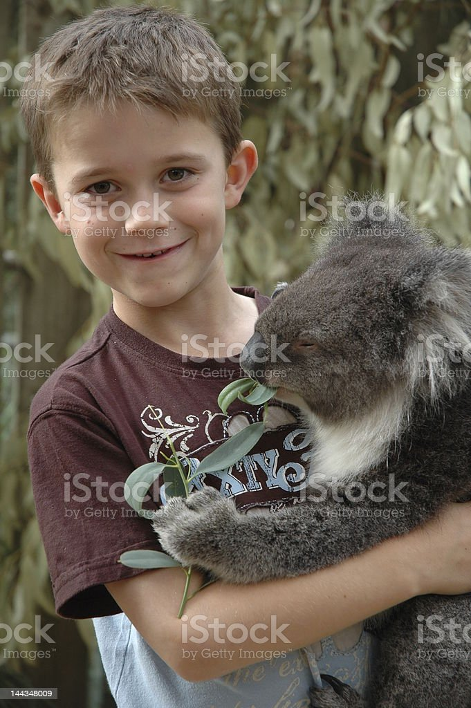 Boy cuddling Koala stock photo