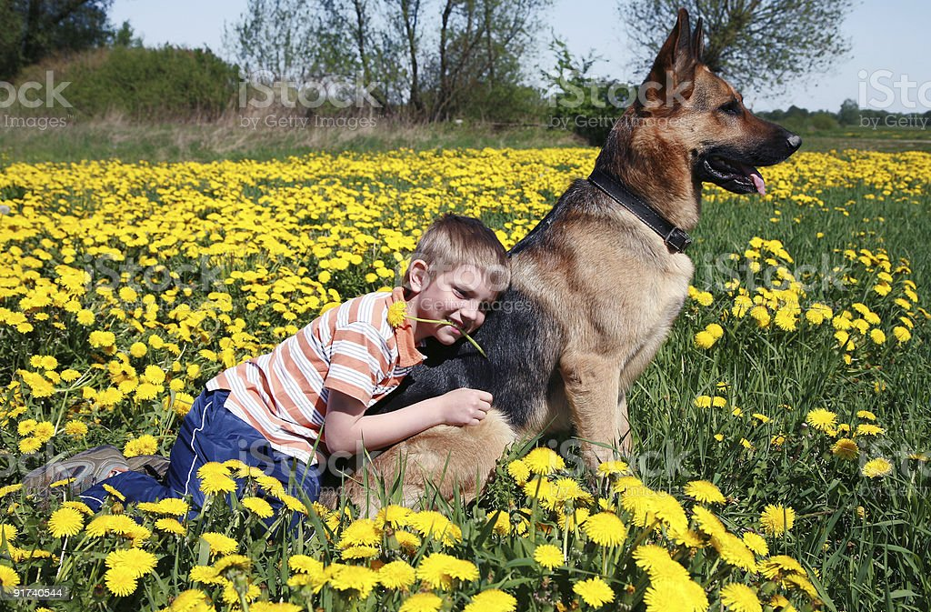 Boy, dog and yellow meadow. royalty-free stock photo