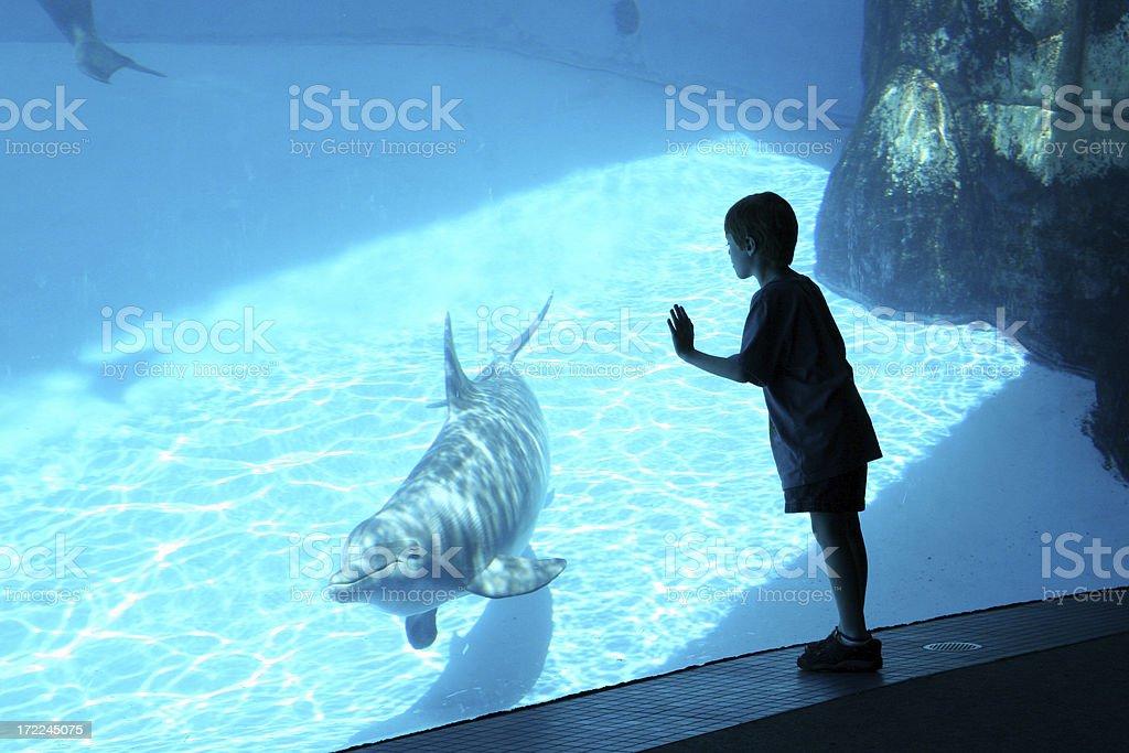 Boy & Dolphin stock photo