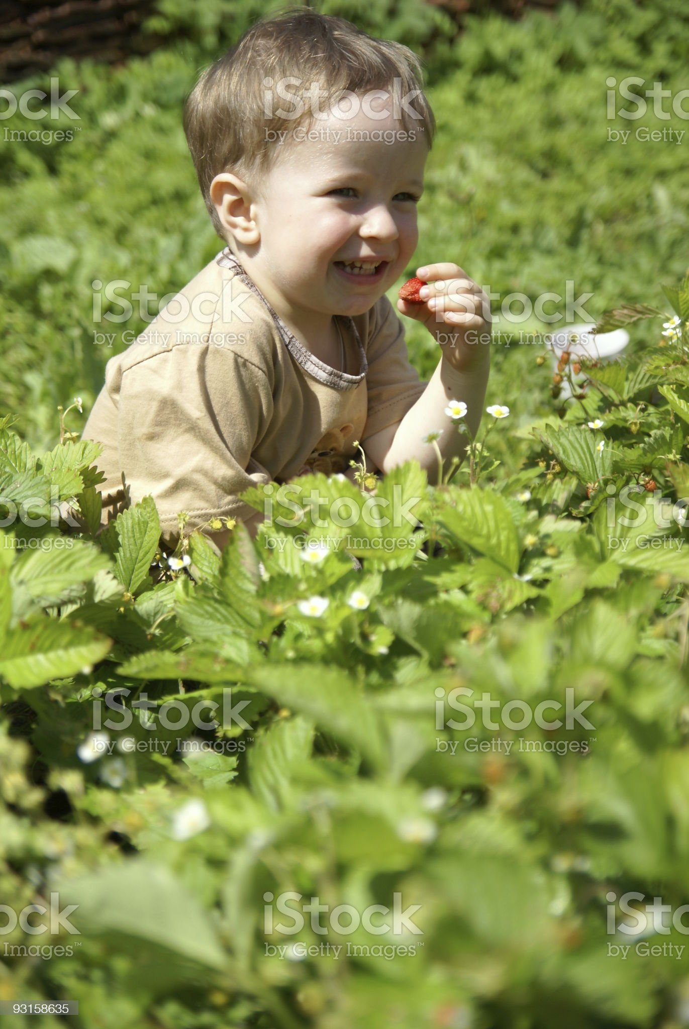 Boy eats strawberries royalty-free stock photo