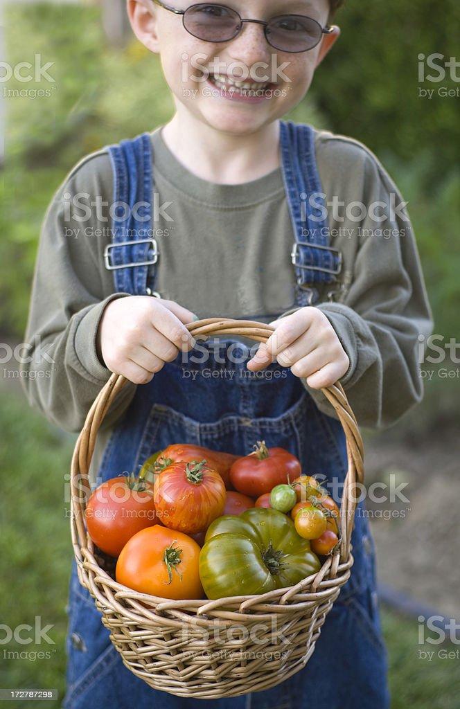 Boy Farmer & Basket, Child in Garden Harvesting Heirloom Tomatoes Vegetables royalty-free stock photo