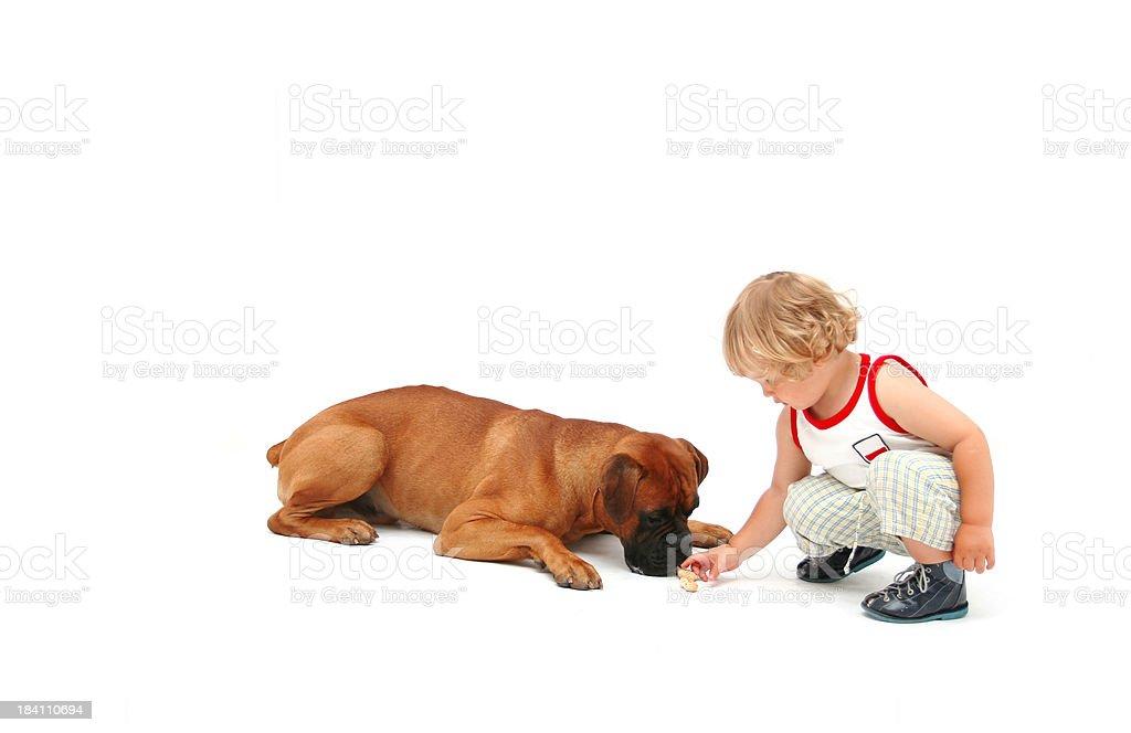 Boy feeding a dog royalty-free stock photo
