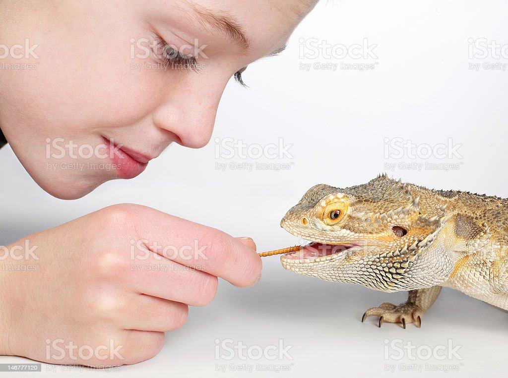 boy feeding reptile royalty-free stock photo