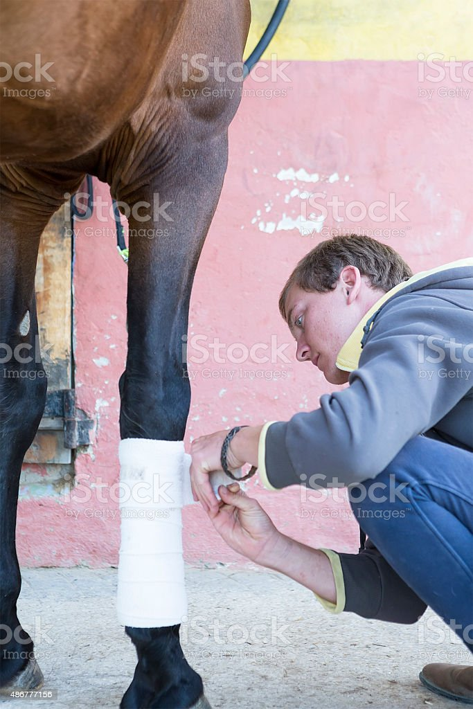 boy grooming a horse stock photo