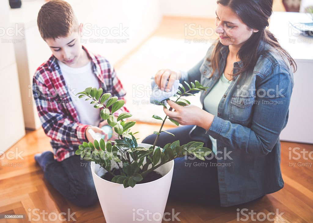 Boy help to mom stock photo