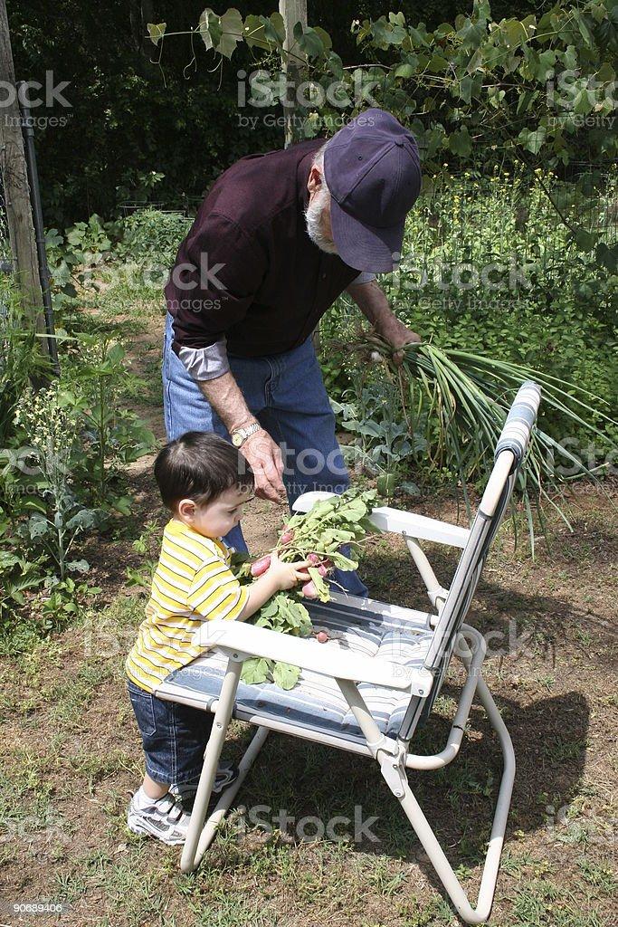 Boy Helping Grandpa In The Garden royalty-free stock photo