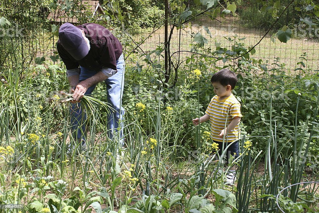Boy Helping Grandpa In The Garden royalty-free stock photo