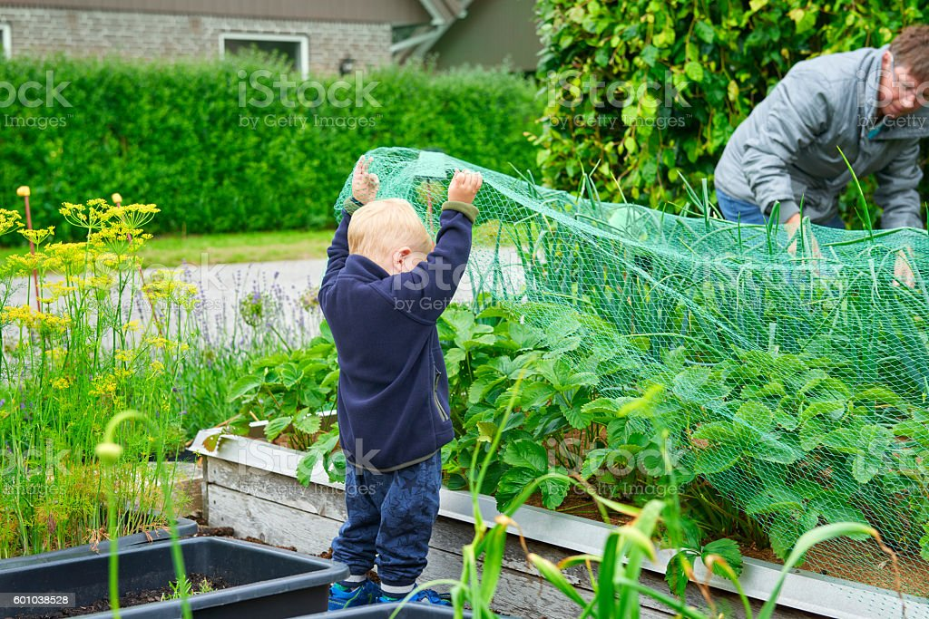 Boy helping in the garden stock photo