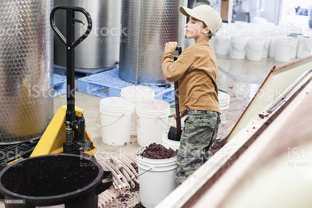 Boy helping out at winery stock photo
