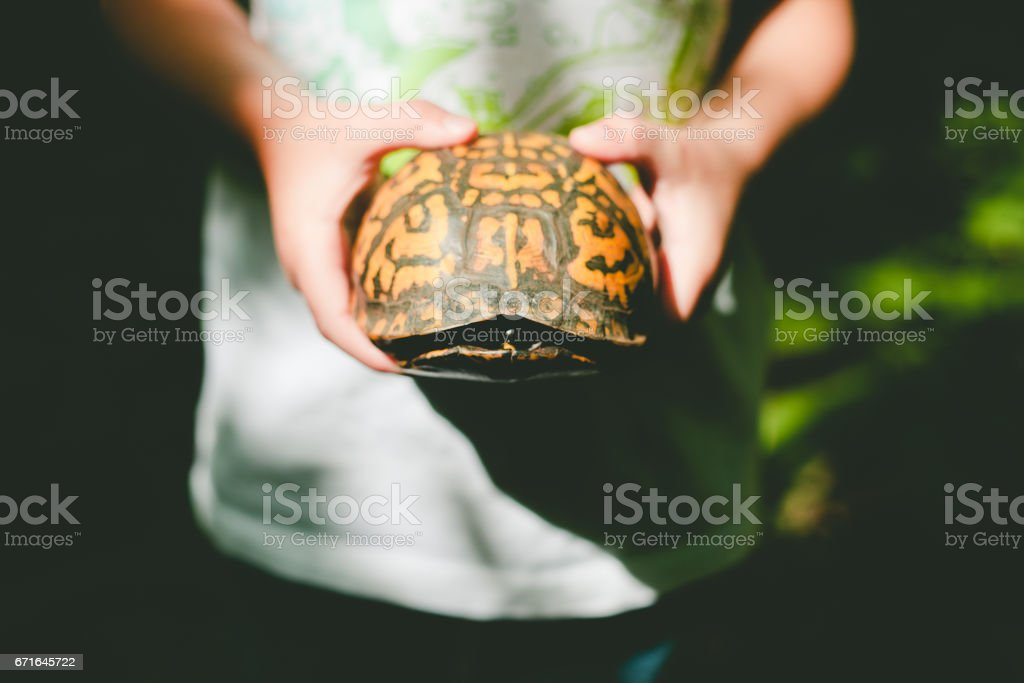 boy holding a turtle shell stock photo