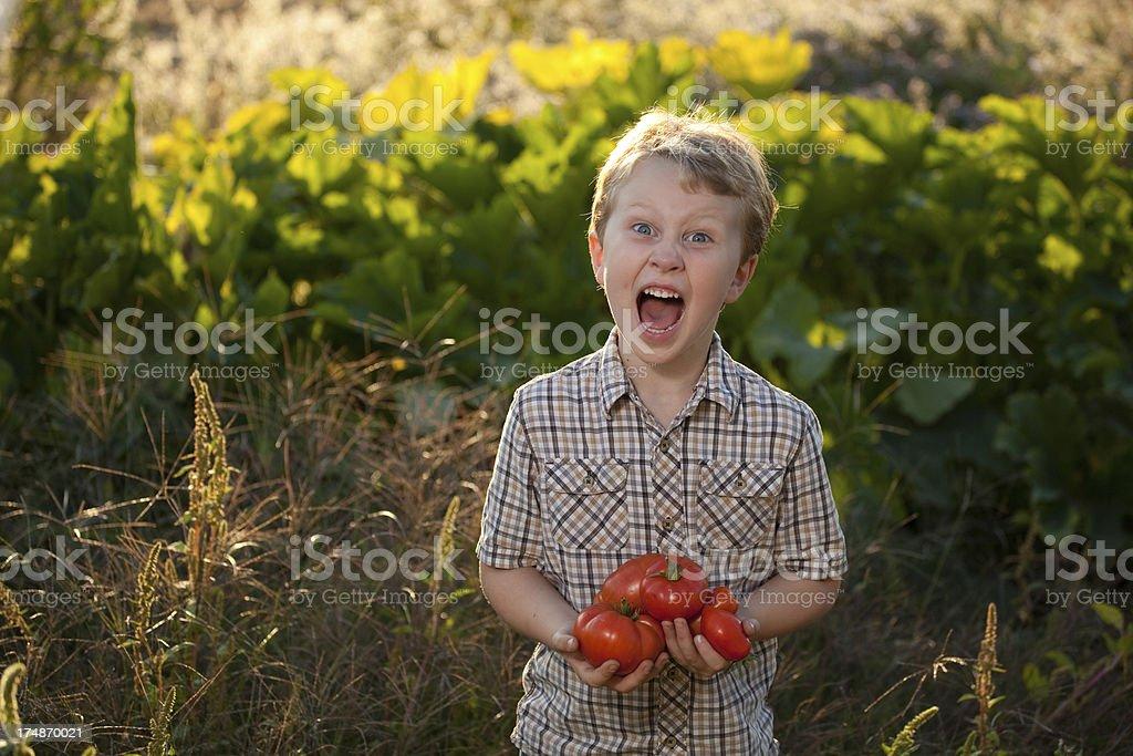 Boy Holding Garden Fresh Tomatoes stock photo