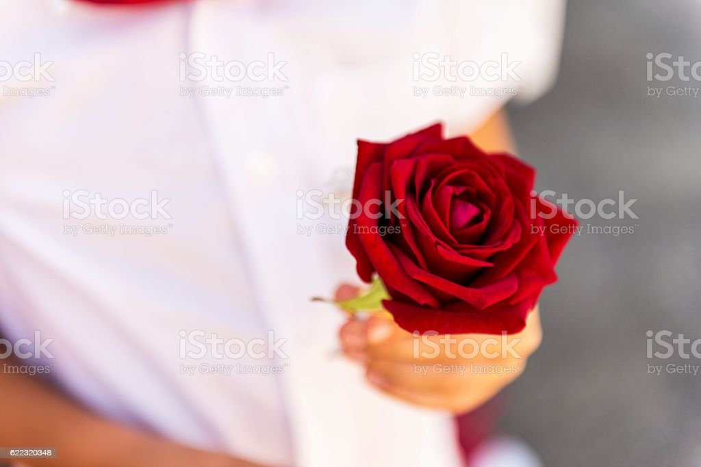 Boy holding red rose stock photo