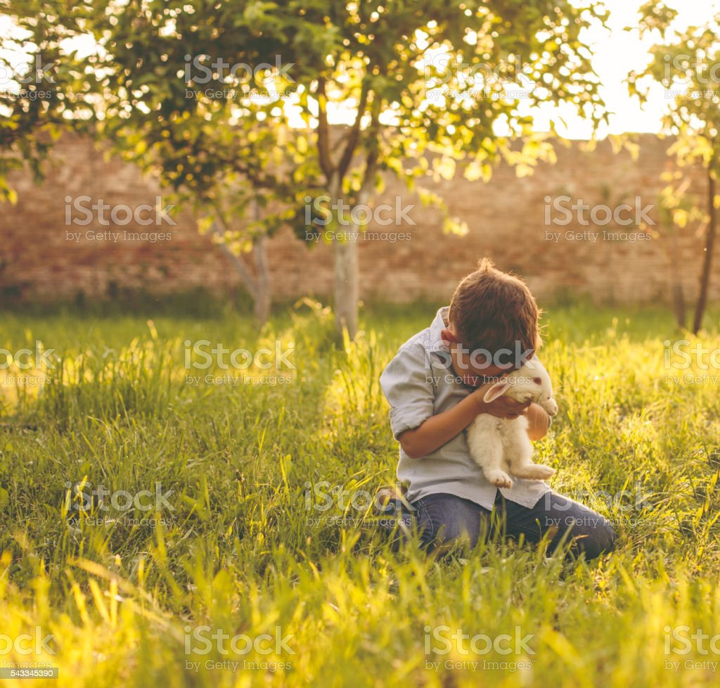 Boy hugging a rabbit stock photo