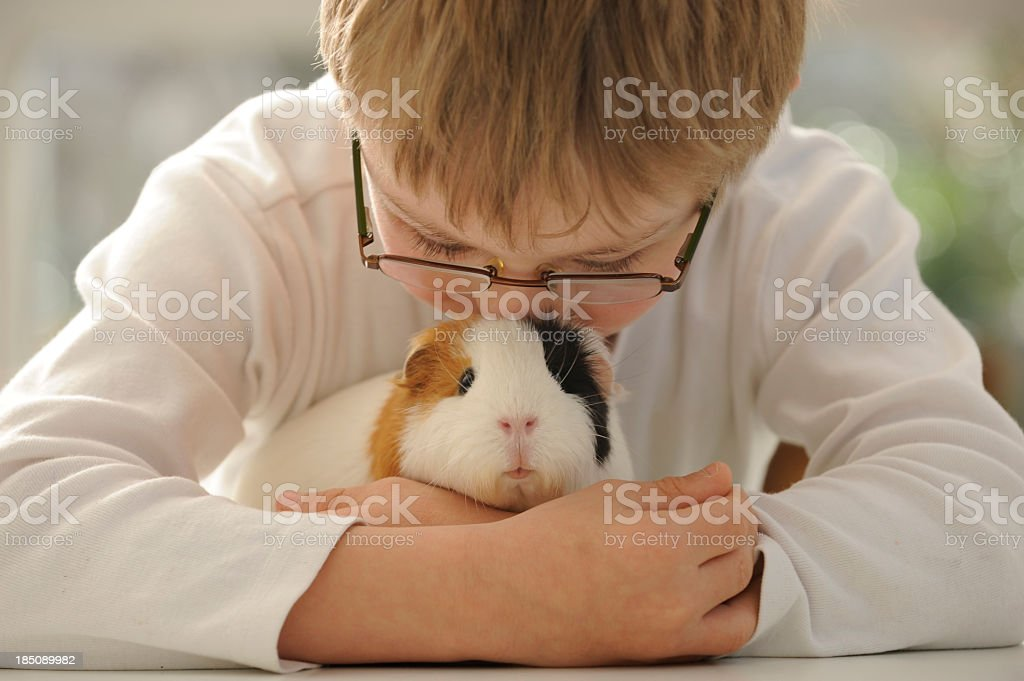 Boy hugging guinea pig stock photo