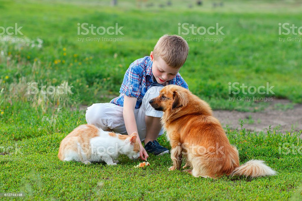 boy in a plaid shirt feeding the cat and dog stock photo