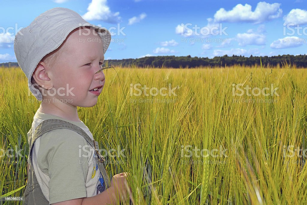 Boy in a wheat field royalty-free stock photo