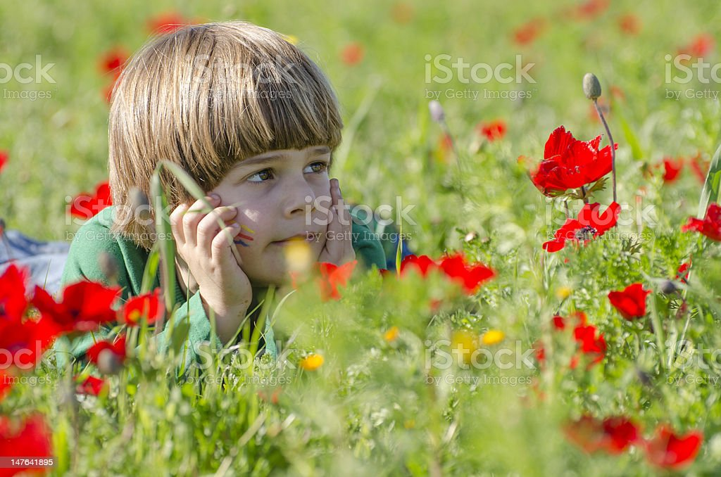 boy in an Anemones field royalty-free stock photo